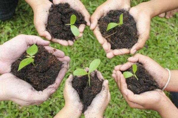 پژمانفر: مشکل در خلأ اراده ها و جدی نگرفتن موضوع فضای سبز است نه قانون